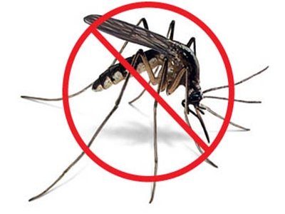 Mosquito Control Treatment In Pune - Ganraj Herbal Pest Control